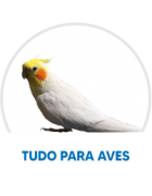 Top 20 Aves