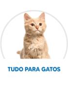 Top 20 Gatos