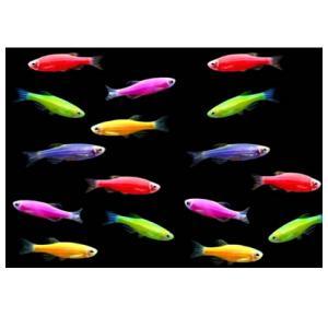 Peixe Néon Pequeno
