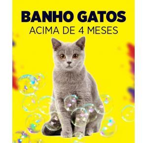 Banho para gatos acima de 4 meses