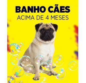 Banho para cães acima de 4 meses
